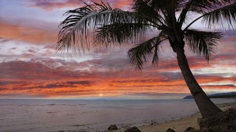 palm-tree-at-sunset-bohol-island-5080